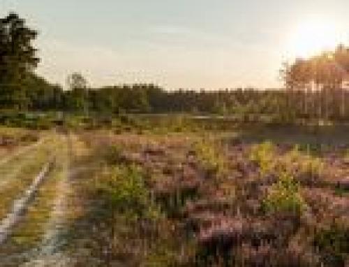 Micro adventure Averbode Bos en Heide 24/2/2019